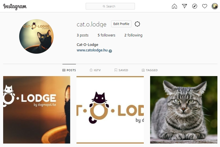 cat-o-lodge-2